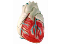 Психологическая поддержка помогает избежать инфаркта