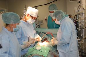 9 октября 2014 года хирургами Республиканского кардиологического Центра выполнена очередная операция по пересадке сердца.